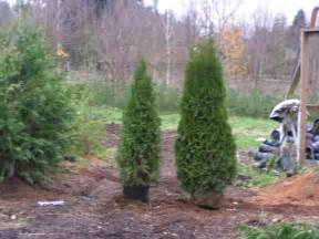 arborvitae what you need to article