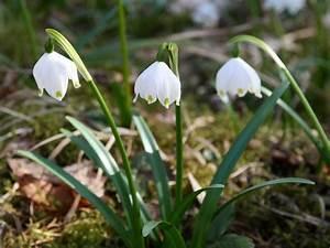 Garten Im März : blumen im m rz ~ Lizthompson.info Haus und Dekorationen