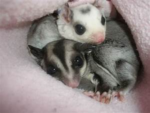 Pin by Sherry Heater on gliders | Pinterest