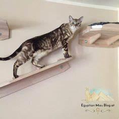 Kochen Für Katzen : katze erziehen und sie verstehen k nnen 40 bilder von ~ Lizthompson.info Haus und Dekorationen