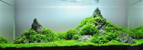 Mountain Aquascape by A Guide To Aquascaping The Planted Aquarium