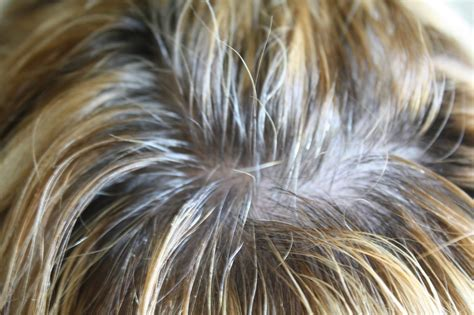 Hair Root Cover by Coloring Roots On Highlighted Hair Highlighted Hair With
