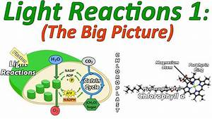 Photosynthesis  The Light Reactions  Part 1  The Big