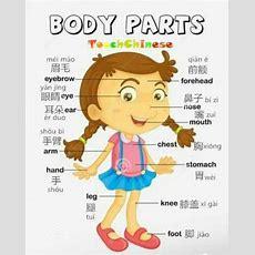 Body Parts  Vocabulary #chinese #mandarin #language  Foreign Languages  Pinterest Mandarin
