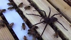 Se Débarrasser Des Araignées : l 39 incroyable confrontation entre des abeilles et une ~ Louise-bijoux.com Idées de Décoration