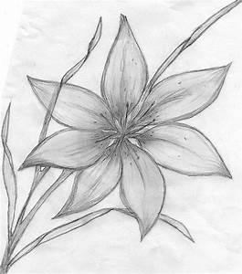 pencil drawings of flowers   MaeBelle › Portfolio › Lily ...