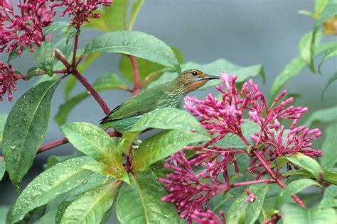 humming bird plants hummingbird san diego zoo animals plants