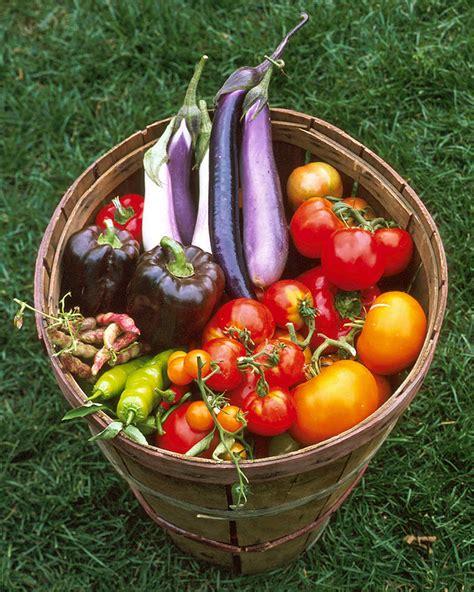 planning  vegetable garden martha stewart country