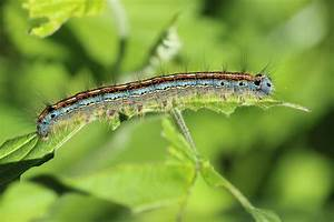 Free Images   Nature  Grass  Wildlife  Green  Insect