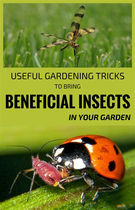gardening tricks  bring beneficial insects
