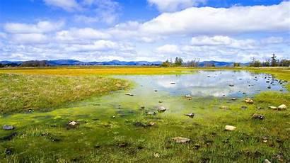 Nature Clear Wallpapers Water Desktop Grass Backgrounds