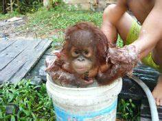 1000+ images about Monos y Simios on Pinterest   Baby ...