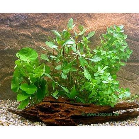 lot de plantes d aquarium pour d 233 butant zooplus be