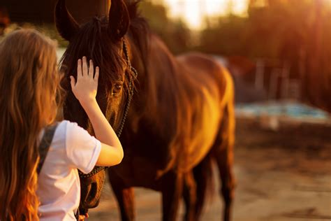 durchfall beim pferd homoeopathisch behandeln expertode