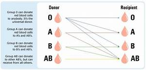 Positive And Negative Blood Type Chart Why Can 39 T You Use Blood From Other Blood Types