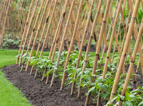 Bamboo Vertical Garden by Bamboo Pole Beans 171 Inhabitat Green Design Innovation