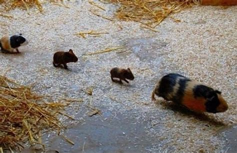 cute baby animals pictures   moms tail