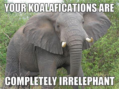 Elephant Meme - completely irrelephant funny animal meme