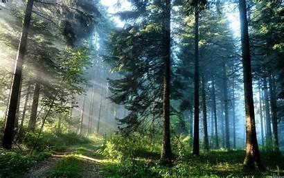 Woods Desktop Nature Wallpapers Ipad Road