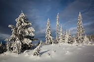 Lillehammer Norway Trees Snow