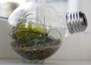 Light Bulbs For Plants by How To Make A Tiny Terrarium In A Light Bulb The Hipster