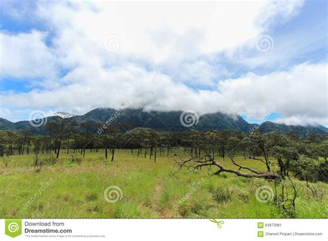 green grass field and pine tree with cloudy sky stock