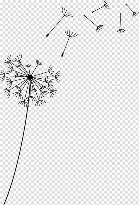 flower common dandelion flower transparent background