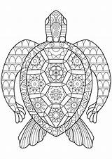 Turtle Coloring Turtles Zen Abstract Patterns Pages Adult Animals Regular Very sketch template