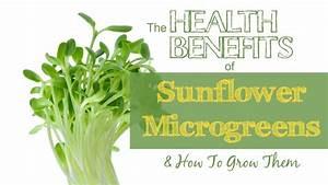 The Health Benefits Of Sunflower Microgreens How To Grow