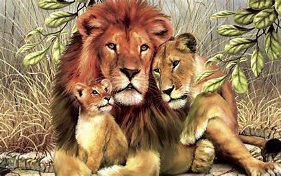 Lion Wild Animals Hugs Animal Definition