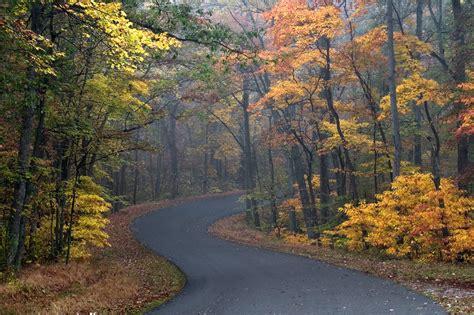 วอลเปเปอร์ : ต้นไม้, แนวนอน, ตก, ธรรมชาติ, เช้า, ถิ่น ...