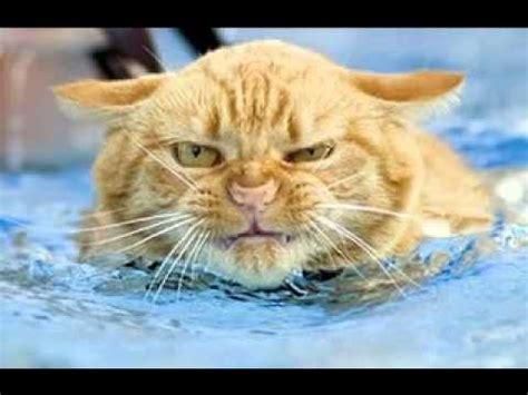 Funny Animal Expressions Ktawa Com Ayo Ketawa