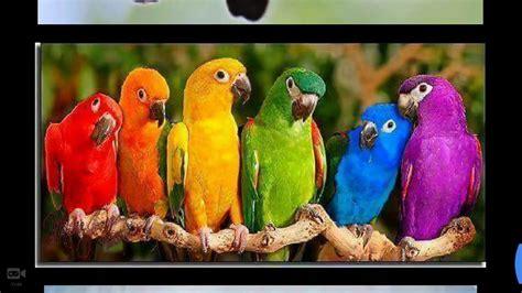free bird images big bird images colorful birds