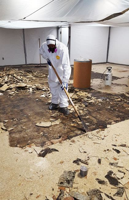 asbestos removal abatement mold removal remediation