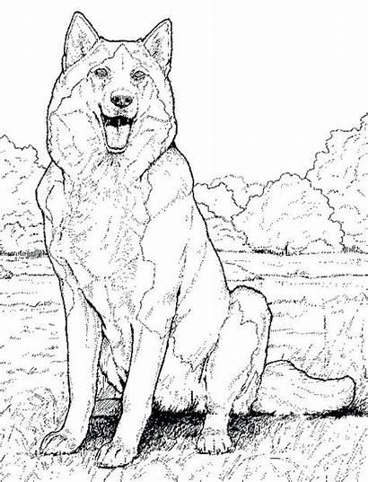 Coloring Pages Animal Realistic Printable Husky Dog