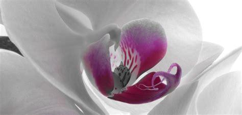 comment entretenir une orchidée plante d int 233 rieur comment entretenir une orchid 233 e grazia