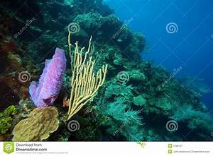 Underwater Coral Reef Scene Stock Image - Image: 7242127