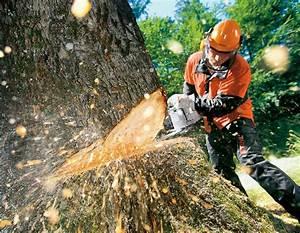 Baum Fällen Technik : baumf llen kann teuer werden manfred nirwing immobilien ~ A.2002-acura-tl-radio.info Haus und Dekorationen