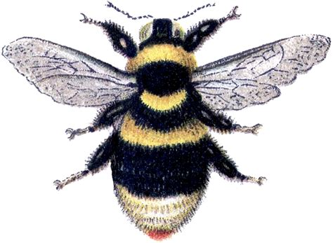 Bumble Bee Clip Marvelous Bumblebee Clip Image The Graphics
