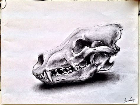 animal skull drawings - Google Search | skullvarious ...