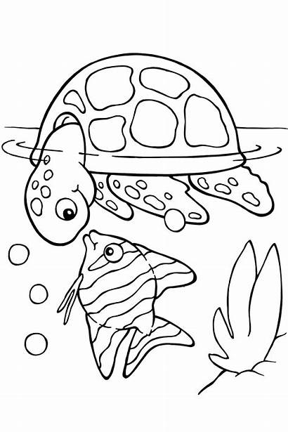 Coloring Turtle Sea Pages Animals Printable Colouring