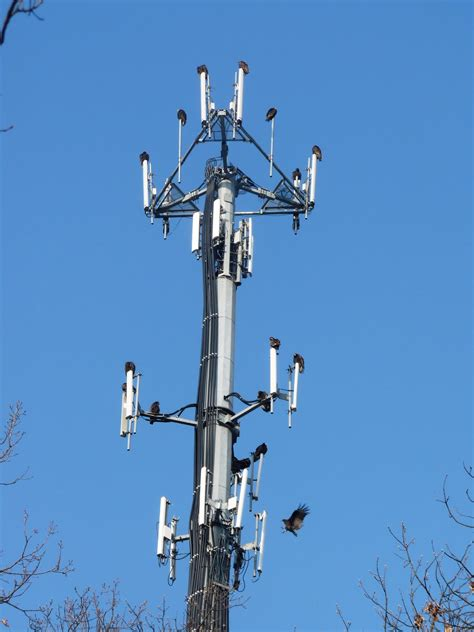 cell phone towers the hereafter report cell towers across us can gain