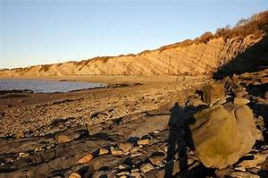 54 best images about Fossils, Minerals & Rocks in Nova ...