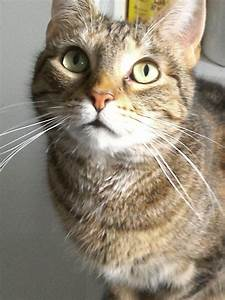 Katzen Fernhalten Von Möbeln : katzen f ttern erinnerungshilfe frag mutti ~ Sanjose-hotels-ca.com Haus und Dekorationen