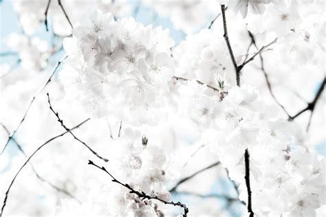 Weisse Blickdichte Vorhänge by Die 75 Besten Wei 223 E Hintergrundbilder