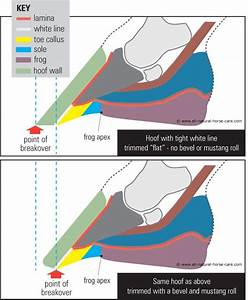 343 Best Images About Horse Health Hooves Anatomy Of Misc