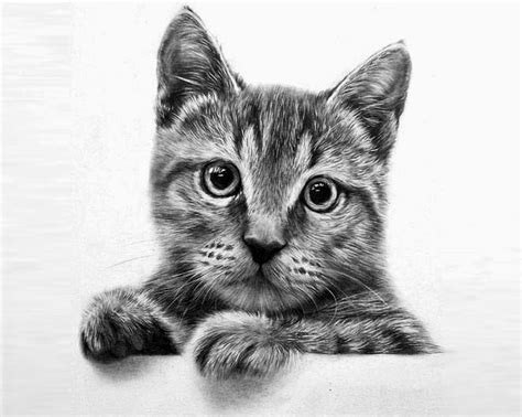 20+ Beautiful Realistic Cat Drawings To Inspire You