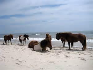 Wild Horses Assateague Island National Seashore
