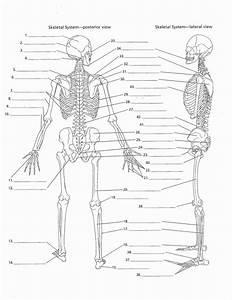 Skeletal System Labeling Worksheet Pdf Fresh Human Skeleton Diagram Labelling Sheets