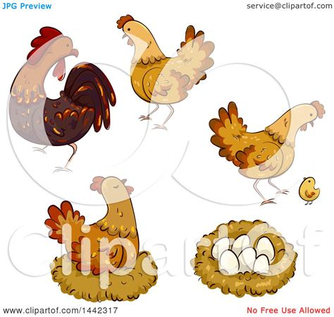 clipart  hen chickens  rooster nest chick  eggs royalty  vector illustration